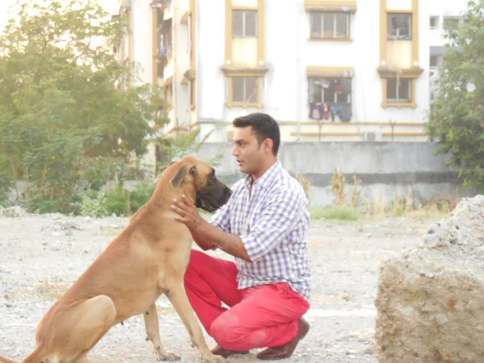 Action Dogs Services Pvt  Ltd  - Dog training centres in Dadar